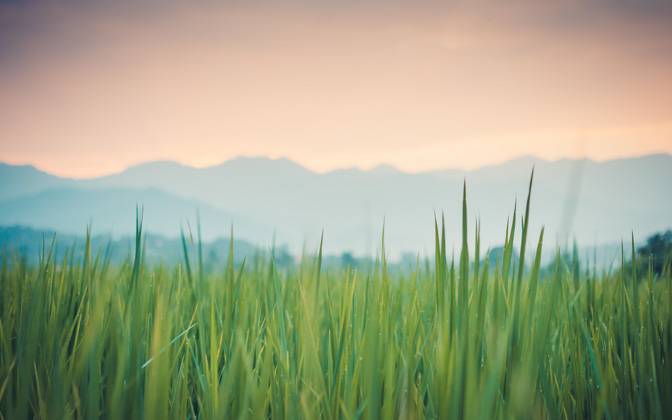 High-resolution desktop wallpaper The Greener Grass by Morre