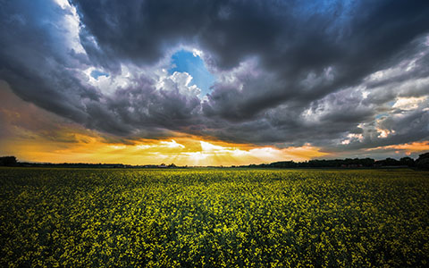 High-resolution desktop wallpaper Where the Yellow Fields are Swaying by Lowe Rehnberg
