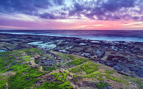 High-resolution desktop wallpaper Sea Moss Sunset by Robert Bynum