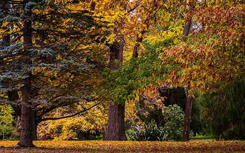 High-resolution desktop wallpaper Autumn Colours by tizzards