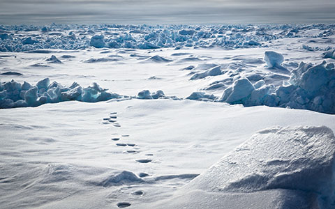 High-resolution desktop wallpaper Polar Tracks by stefanbecker