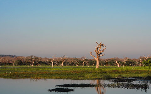 High-resolution desktop wallpaper Yala National Park by Bluro