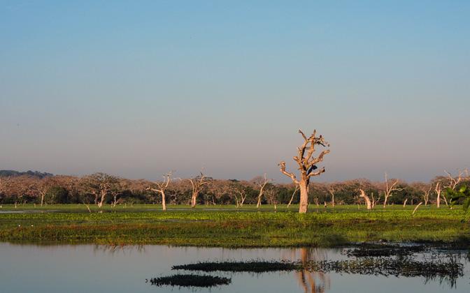 High-resolution desktop wallpaper Yala National Park by Bluro