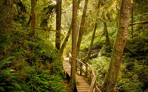 High-resolution desktop wallpaper Rainforest Trail by mark greenfield
