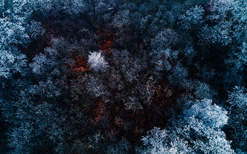 High-resolution desktop wallpaper The Red Ice Forest by Luukdek