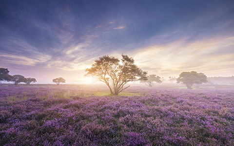High-resolution desktop wallpaper Zuiderheide by Gerard87
