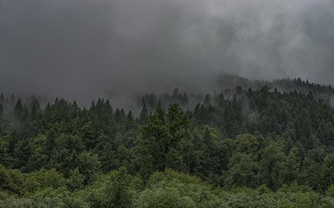 High-resolution desktop wallpaper The Forest by Morgan Adkins