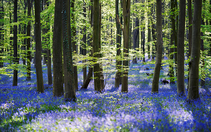 High-resolution desktop wallpaper Bluebells by TheWanderingSoul